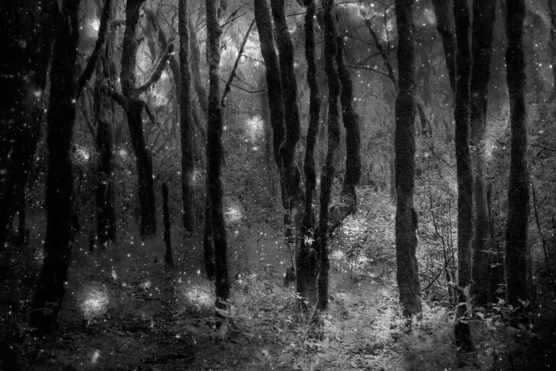 Fable of the forest #19 Images by Mayke Swemle and X-ray: NASA/CXC/Univ.Potsdam/L.Oskinova et al; Optical: ESA, NASA/STScI; Infrared: NASA/JPL-Caltech